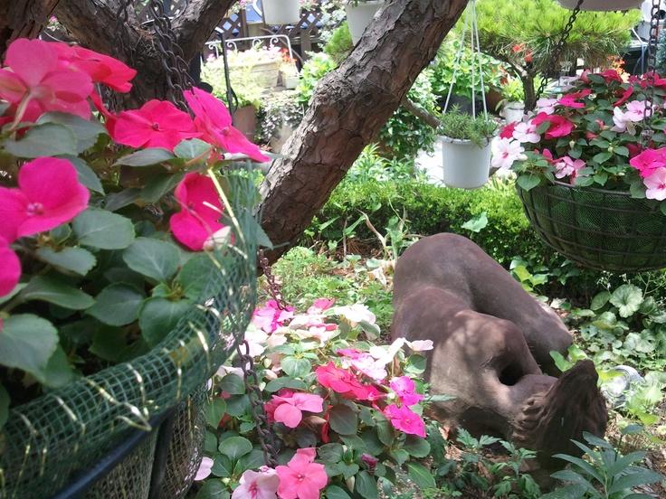 Beautiful flowers, in my garden, South Korea