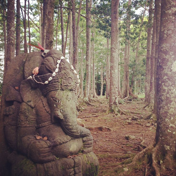 #hindu temple, #Kauai. Rudraksha forest — only one in US. They say the beads are #Shiva's tears and that if you hug a Rudraksha tree, it takes away your sorrows or what you don't want. #ganesha Surfing Into Surrender: http://eepurl.com/Pwavr