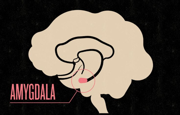 Social Anxiety and the Amygdala Hijack: http://www.socialtransformation.us/social-anxiety/amygdala-hijack/