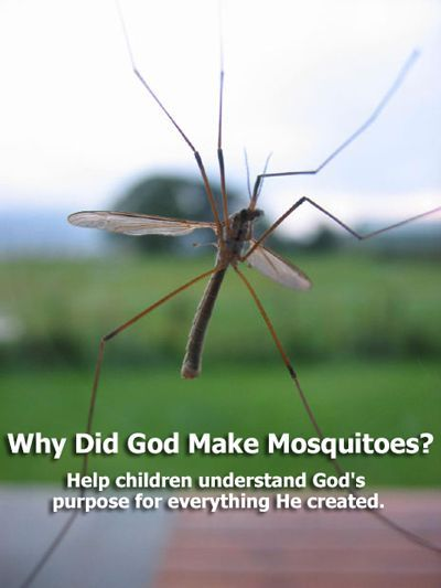 Children's Message: Why Did God Make Mosquitoes ...
