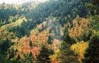 Autumn in Serra da Estrela, Mountain Beiras, Portugal. http://www.hideawayportugal.com/modules/property/region_detail-8.htm#