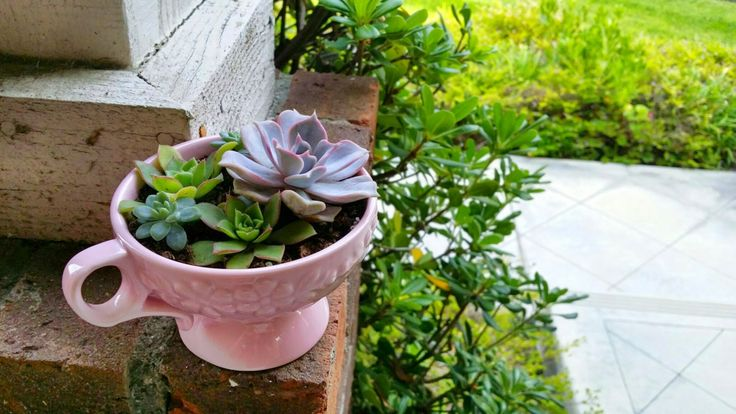 Pretty Pink Rustic Teacup with Succulent Arrangement (PLANTS INCLUDED!) by MadeByMrow on Etsy
