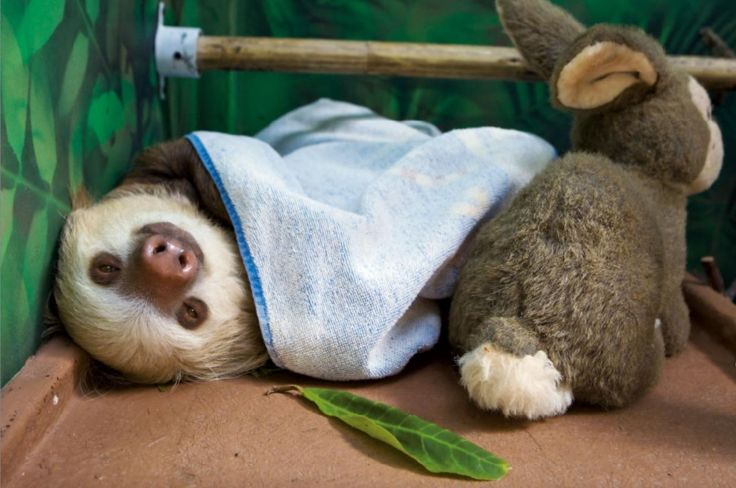 Sleepy sloth sloths my spirit animal pinterest