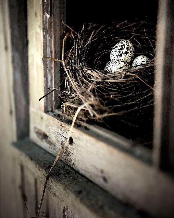 Bird's Nest, Eggs In Nest, Bird's Nest On Windowsill - Home For All Of Us