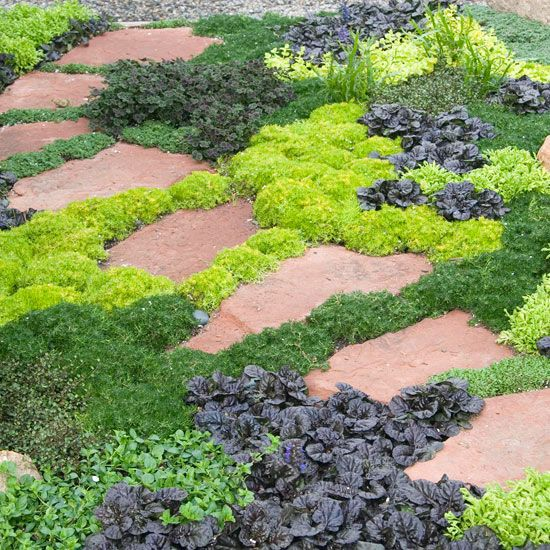 Lush ground cover to add texture and prevent weed seeds from germinating in open soil.