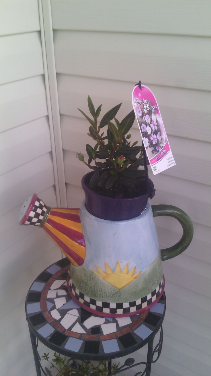 """""""Style Solutions"""" just one of the many gorgeous potted plants I have started collecting!"""