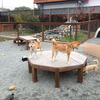 Dog Play Area - it's funny how much dogs love something as simple as a platform!