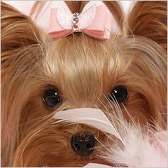 1000 Images About Yorkies On Pinterest