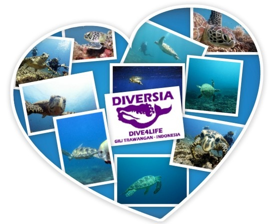 we love turtles -Diversia Diving Gili Trawangan Lombok Indonesia