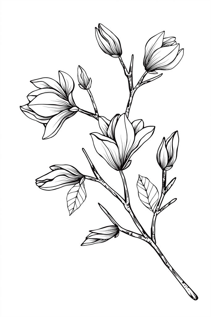 Magnolia Flower Sketches Flower Line Drawings Flower Drawing
