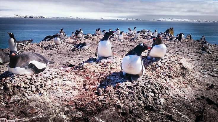 Say Penguins! Our Gigapixel camera gets up close in Antarctica
