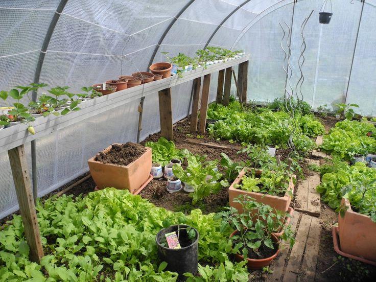 Pourquoi semer sous une serre de jardin ou sous abri