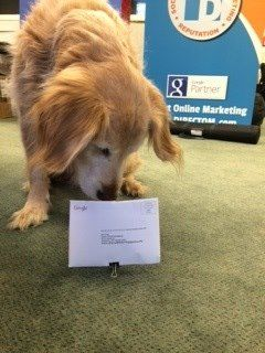 SEO Dog was excited to get mail from Google! He DUG in!!
