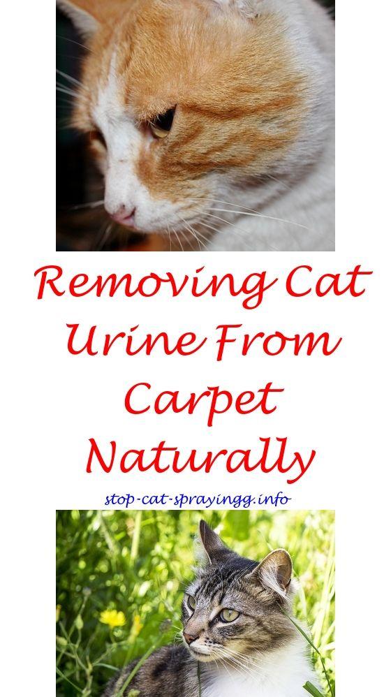 Ag Cat Spraying | Cat Deterrent Air Spray | Pinterest | Sprays, Cat
