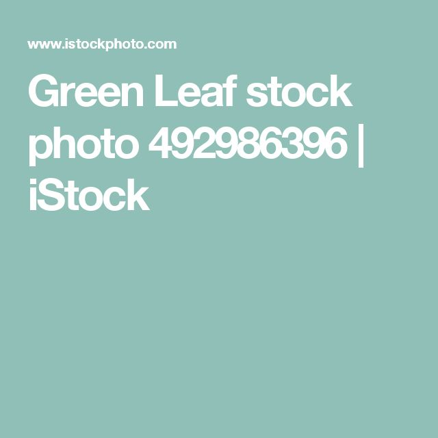 Green Leaf stock photo 492986396 | iStock