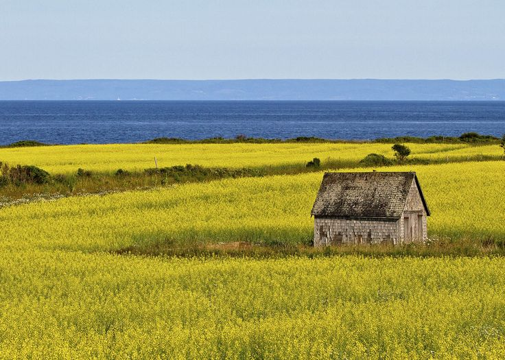 Colour our world Location: Cape Bear Road looking over Northumberland Strait, Prince Edward Island Submitted by: Michael N.