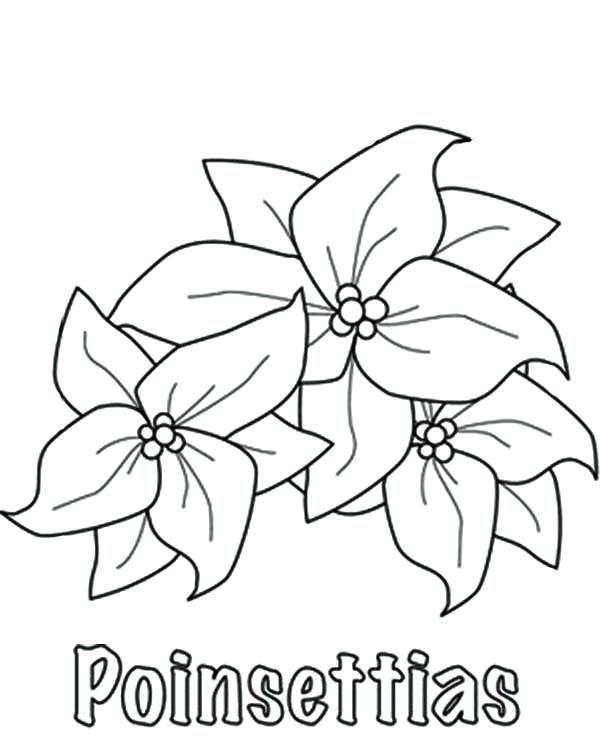 Pin de Andrea Perez en Flores | Pinterest | Coloring pages ...