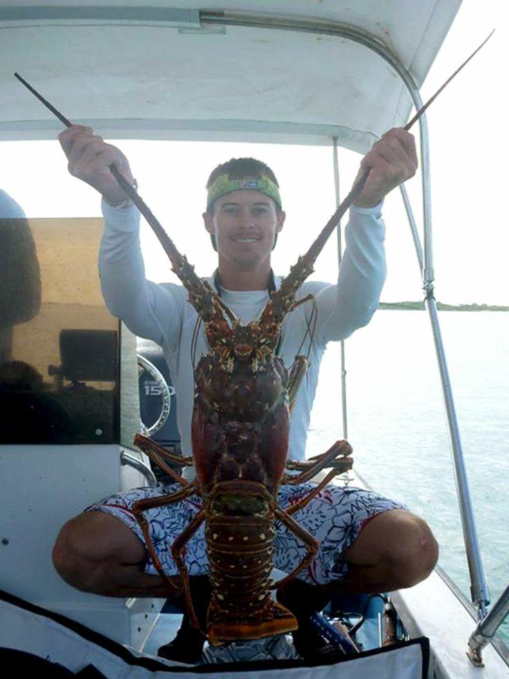 Lobsters on Pinterest