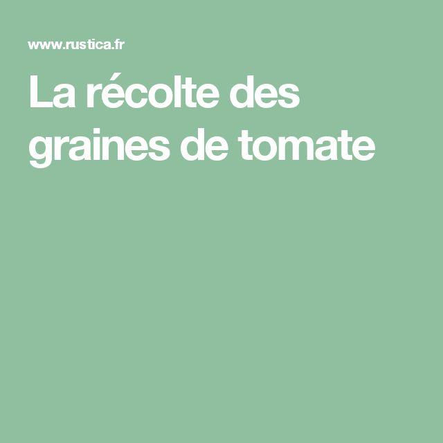 La récolte des graines de tomate