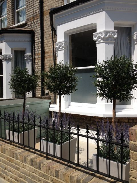 Stunning exterior faux Olive topiary with underplanting of English lavender