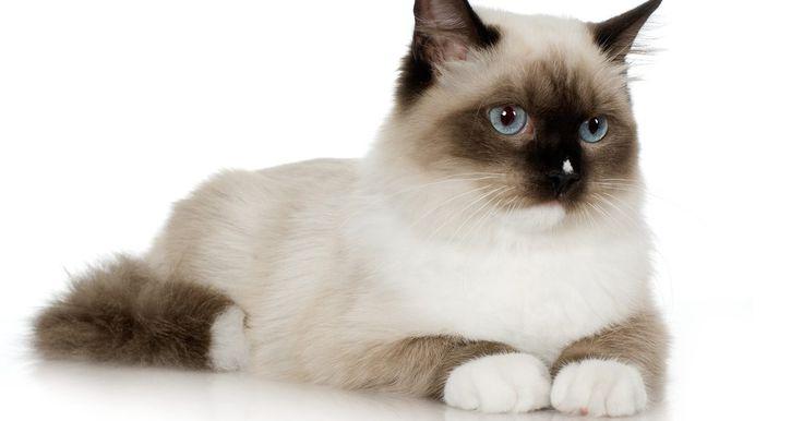 Como neutralizar odores de urina de gato na casa. Quando um gato espalha urina na casa, ou erra a caixa de areia, o cheiro pode se tornar insuportável. A melhor maneira de neutralizar o odor da urina é limpá-la assim que o gato a elimina. No entanto, é possível se livrar do odor mesmo que a mancha de urina seja antiga.