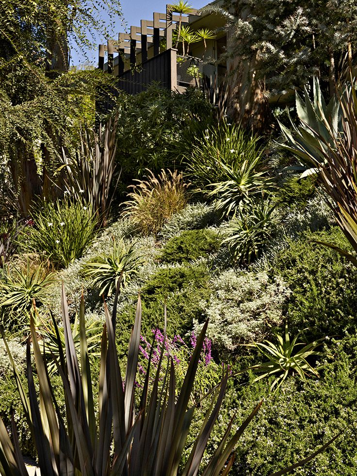 22 best images about slope solutions on pinterest gardens garden makeover and ornamental grasses. Black Bedroom Furniture Sets. Home Design Ideas