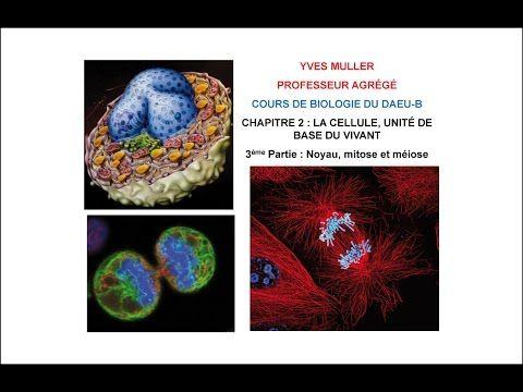 Chapitre 2 –  3ème Partie : Noyau, mitose et méiose - Cours de Biologie du DAEU-B - YouTube