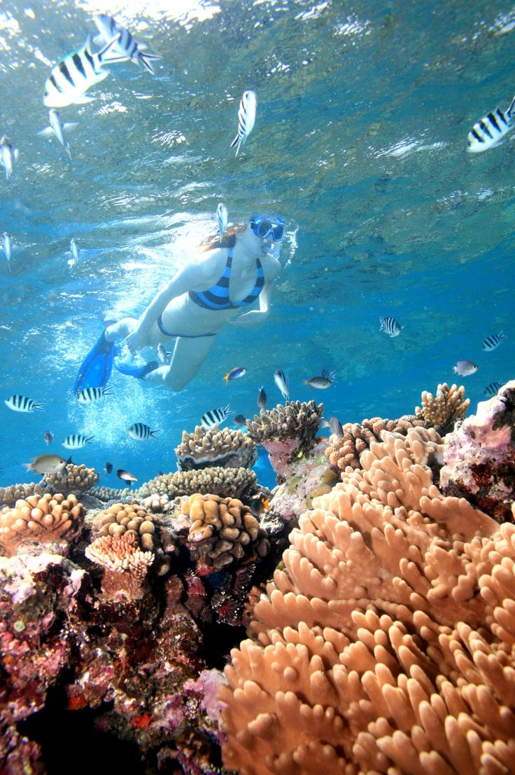 Snorkelling, Port Douglas http://www.executiveretreats.com.au/