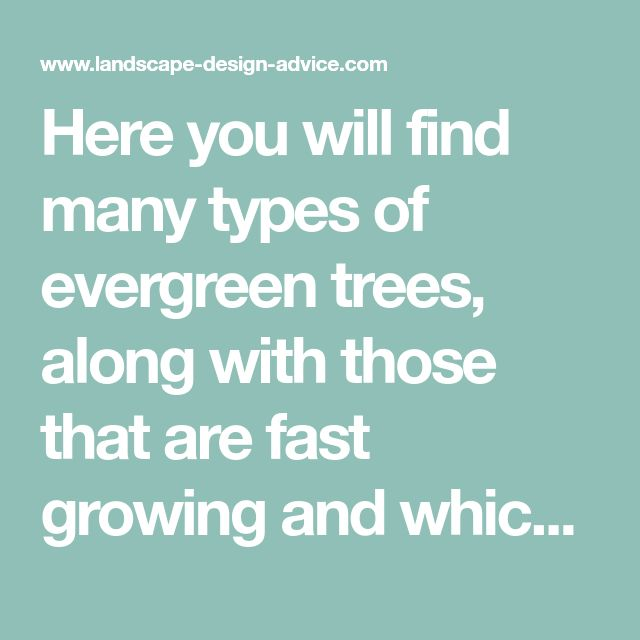 Here you will find many types of evergreen trees, along with those that are fast growing and which ones I would recommend...and why!