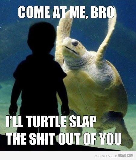 Freaking Hilarious Bro Turtles Slap, Laugh, Ninjas Turtles, Funny Pictures, Funny Stuff, Things, Funny Animal, Hilarious, Giggles
