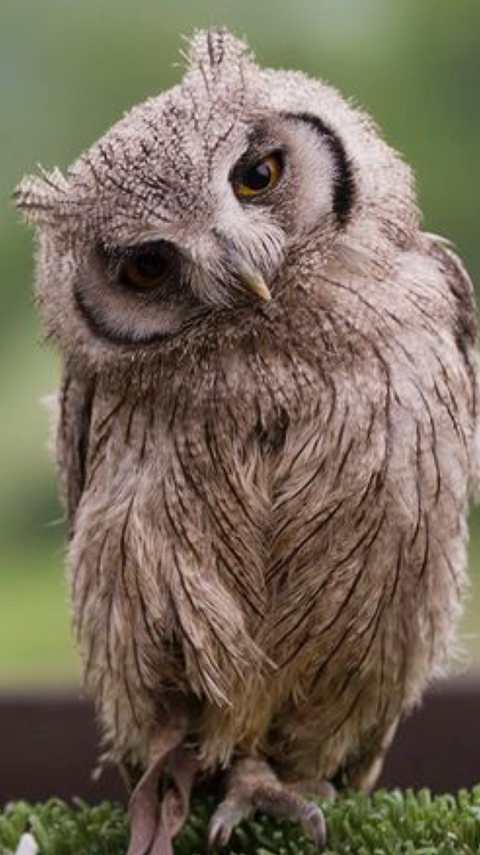 best 25 cute owl photo ideas on pinterest very rare animals