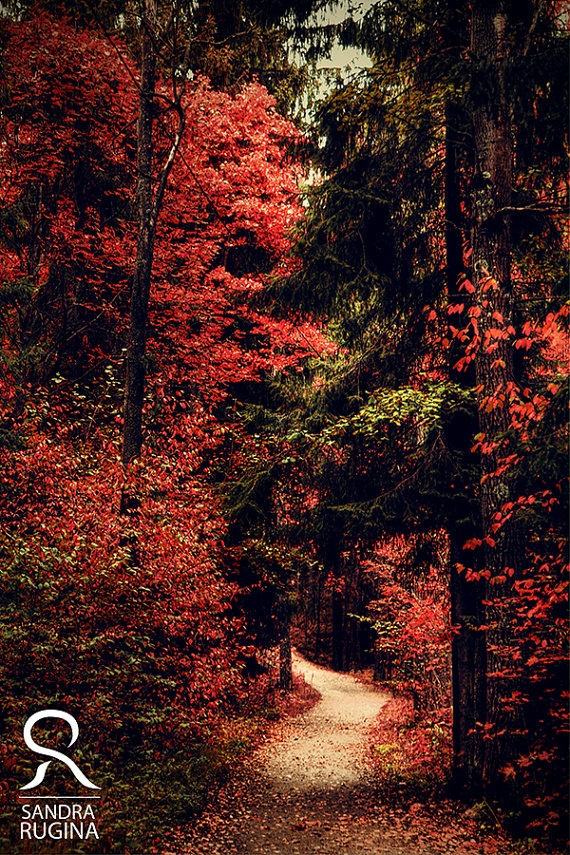 Red colors of autumn surreal photo red trees by behindmyblueeyes, $25.00