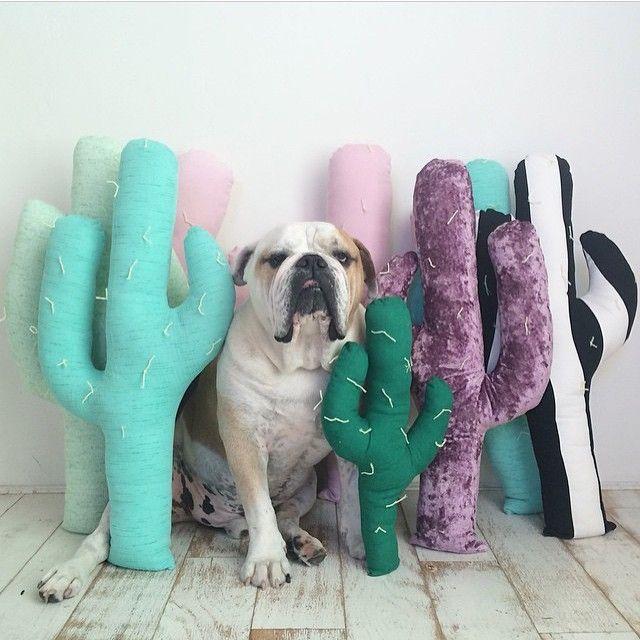 Cactus Pillows by Napkin Apocalypse