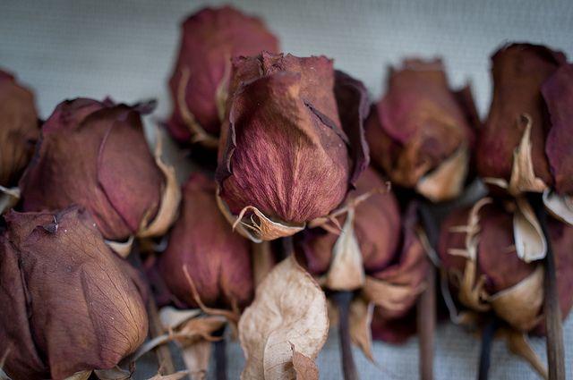 Dead roses (+1 in comment) by Lindeberg Feller, via Flickr