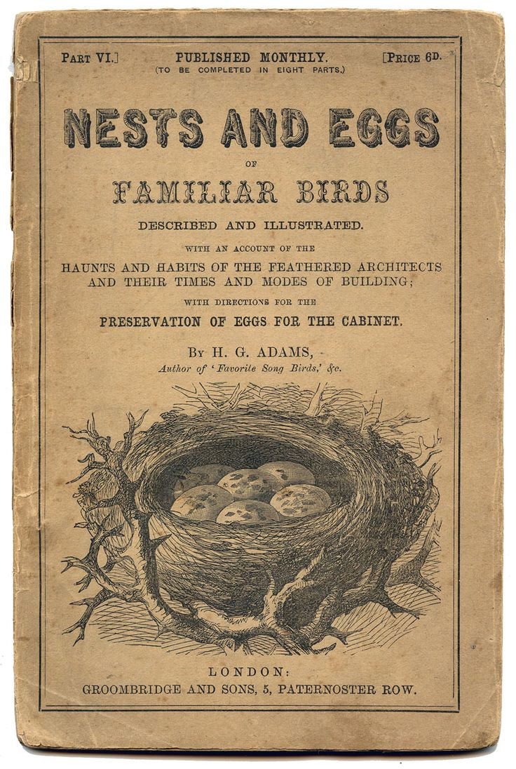 Antique Ephemera Printable - Nests and Eggs Title Page - The Graphics Fairy