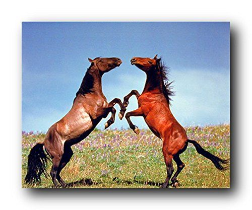 One way to add a whole new dimension to your living space is to add this Stallion horses rearing animal wall decor art print poster. Grab this attractive wall poster just what you need for your home decor! It will add class and beauty to your walls. Hurry up! Grab this wonderful poster for its high quality with perfect color accuracy.