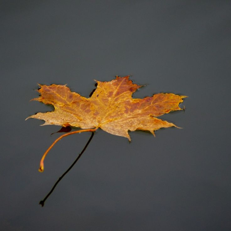 Do you think Autumn leaf in Göta Kanal deserves to win CDON.COM Photo contest? Have your say!