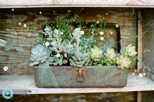 great idea for old tool boxes (I have been buying all kinds of stuff at thrift store, like an old safety deposit box, to put succulents in)