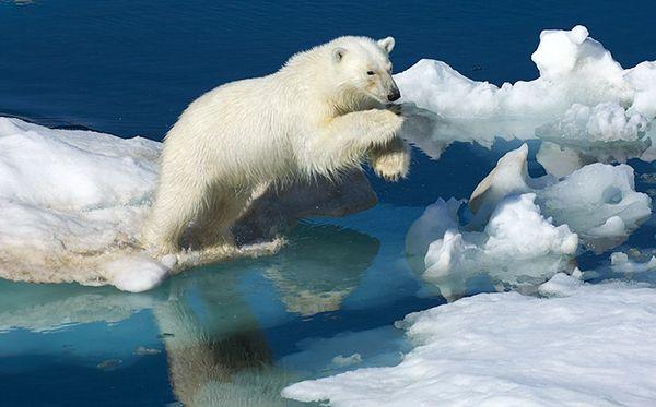 Шпицберген: льды, снега и лучшая пицца в мире #Svalbard