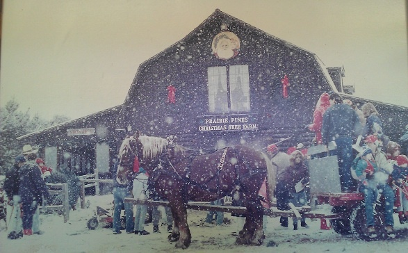 Prairie Pines Christmas Tree Farm - Wichita, Kansas. The ...
