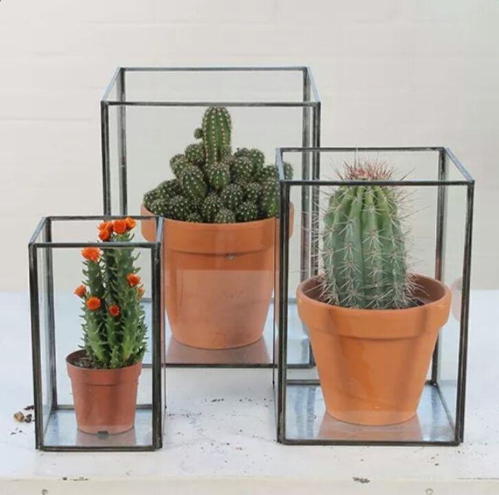 stolp cactus - Google zoeken