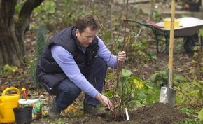 Die beste Pflanzzeit für Bäume, Sträucher und Rosen -  Herbst oder Frühjahr – wann ist die optimale Pflanzzeit für Bäume und Sträucher? Diese Frage stellen sich viele Hobbygärtner, die ihren Garten neu gestalten wollen. Hier finden Sie die Antworten.