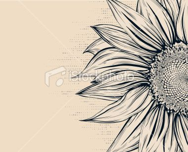 Sunflower Royalty Free Stock Vector Art Illustration