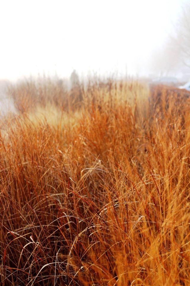 559 beste afbeeldingen over piet oudolf op pinterest for Piet oudolf fall winter spring summer fall