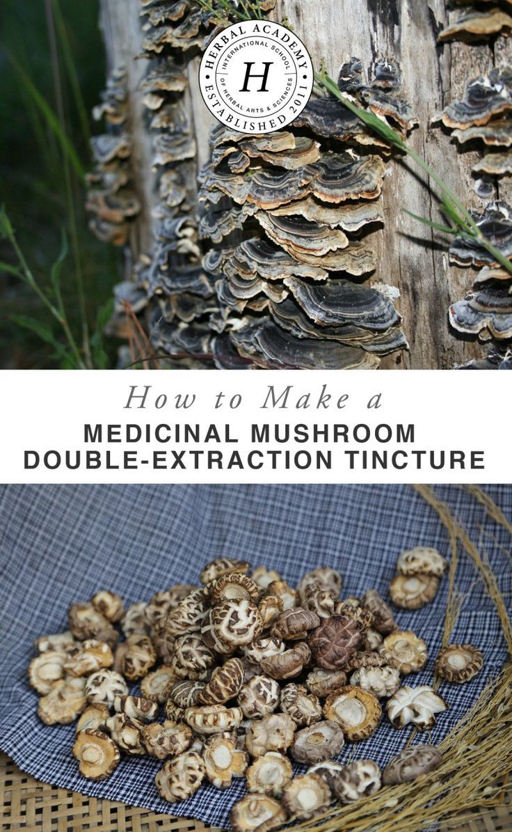 Discover how to make a medicinal mushroom double-extraction tincture. This process is commonly used for immune stimulating herbs, including many of the known medicinal mushrooms such as reishi, maitake, chaga, shiitake, turkey tail, and Cordyceps. Learn how to make your own with the Herbal Academy!