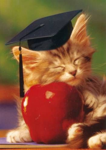Kittens graduation now she sleeps