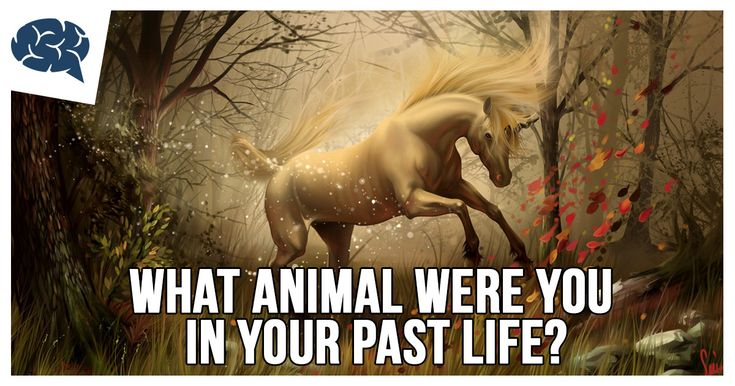What Animal Were You In Your Past Life? | BrainFall