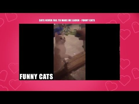 Top Funny Cat Videos - Cat Fails : Funny Cats -Pictures, Videos - http://positivelifemagazine.com/top-funny-cat-videos-cat-fails-funny-cats-pictures-videos/ http://img.youtube.com/vi/KYcdjWzF52I/0.jpg  Top Funny Cat Videos – Cat Fails The funniest cat videos from around the web, updated daily. Browse our archives and share your cat video with us today If you … ***Get your free domain and free site builder*** Click to Surprise me! Please follow and like us: