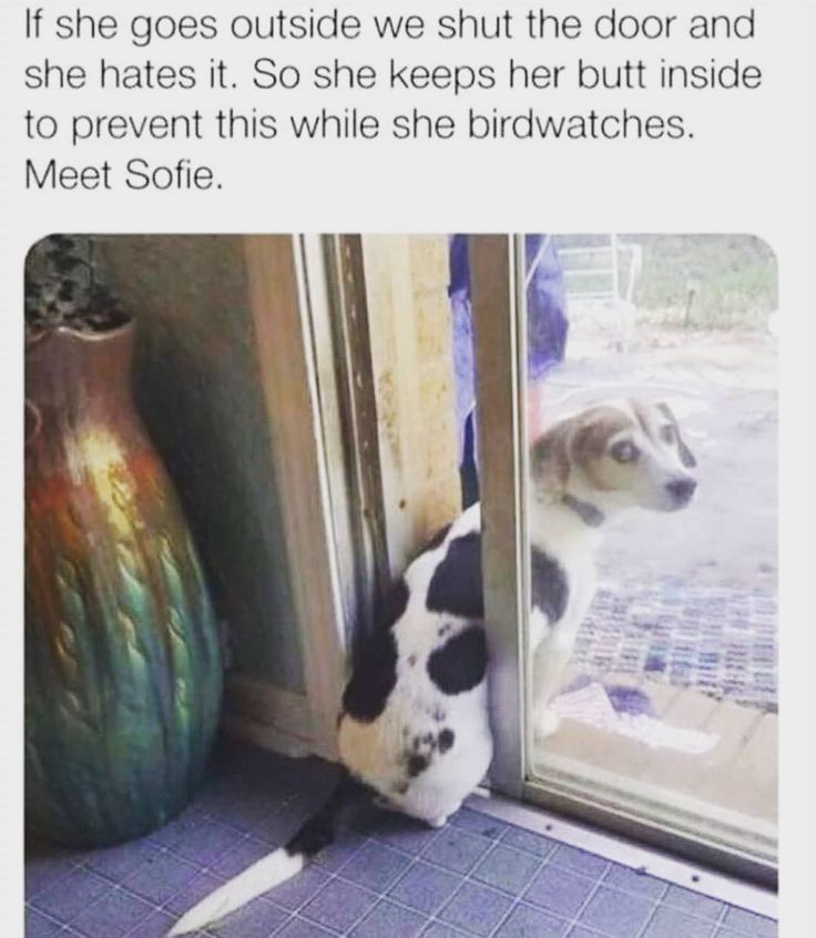 [New] The 10 Best Home Decor (with Pictures) –  Those eyes so cute!! Follow @meme_croy for more #memes #memes #memepage #dog #doge