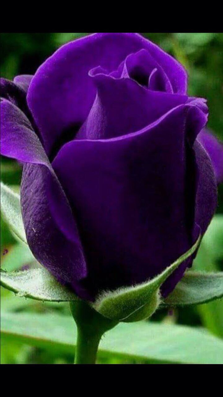 The absolute beauty of purple